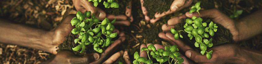 Indvolverede medarbejdere understøtter bæredygtige processer